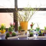 OLL_1865+flowers+4x6-3262659764-O